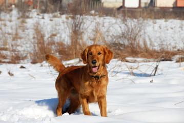 Dog in winter park