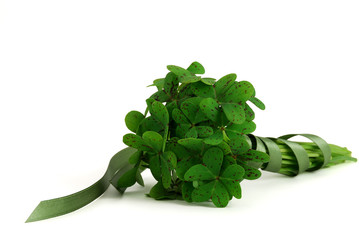 Bouquet of false shamrock with green ribbon
