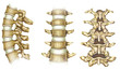 Tres vistas de la columna vertebral