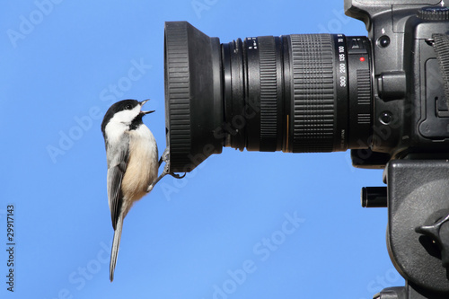 Chickadee On A Camera