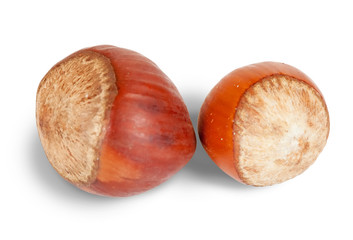 Two  hazelnuts
