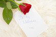 Romantic note with red rose