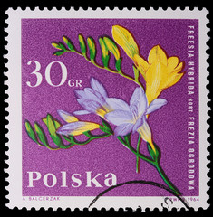 Poland - CIRCA 1964: A stamp - Freesia Hybrida