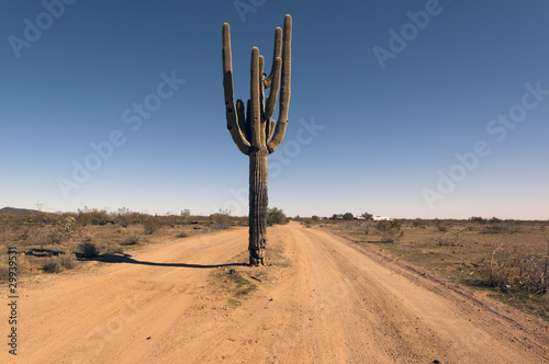 canvas print picture Cactus Road Arizona