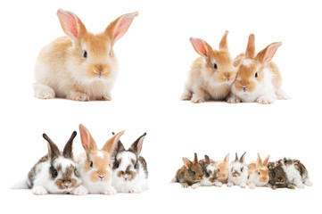 set of baby bunny rabbits