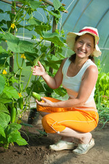 woman is picking cucumber