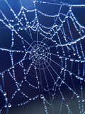 spider web with morning drops