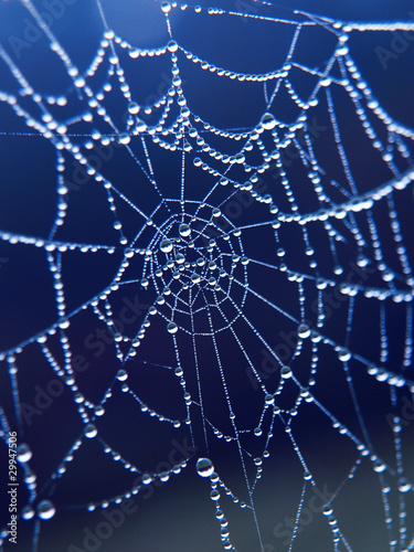 spider web with morning drops - 29947506