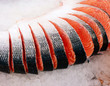 fresh sliced red salmon