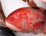 parrotfish closeup at the central market