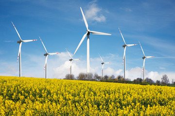 Wind farm with rape field
