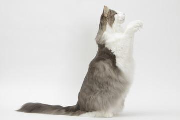 chat qui fait le beau de profil - tour