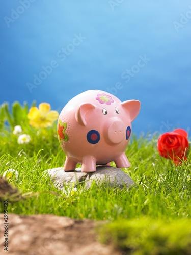 Leinwandbild Motiv schweinchen in der wiese