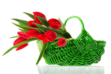 Basket red tulips