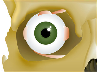 ojo 3 anatomia