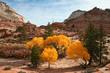 Fall Colors at Zion Canyon