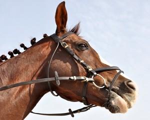 Chesnut horse had