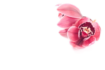 Orchid Buds Background Concept with Space for Text