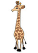 Giraffe on white  Vector Illustration