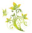 Frühling, Ranke, flora, Blumen, Blüten, filigran