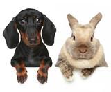 Fototapety Rabbit and dog. Close-up portrait