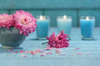 Pink chrysanthemum flowers with candles