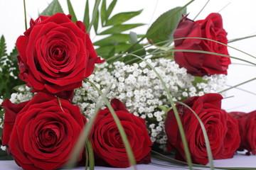 Frühjahr Rosen