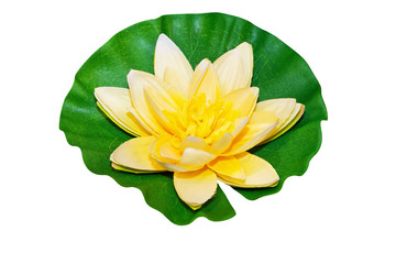 Water lily isolated