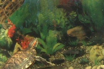 Life of a turtle