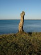 Baumstumpf am Meer