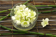 bowl of orchid and thin bamboo-spa background