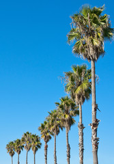 palm tree blue sky frame