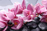 Fototapety Set of cattleya orchid flower and stone with water drops
