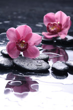 nature morte avec la réflexion orchidée rose