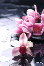 orchid flower and stone with water drops