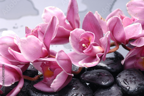 Set of cattleya orchid flower and stone with water drops - 30028324