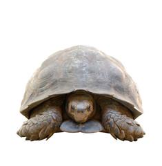 tortoise isolated