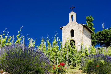 vineyard and Chapel of St. Christopher, Hermitage,France