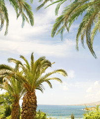 A beautiful resort background with sky, water and palm trees
