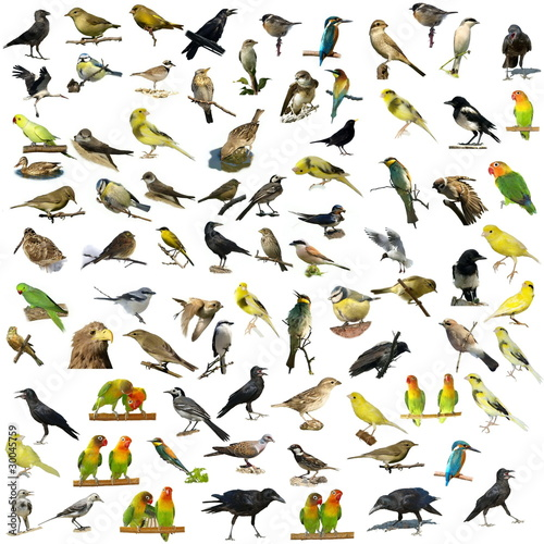 Papiers peints Perroquets Set of 81 photographs of birds isolated