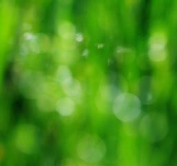 Beautifull blur green background