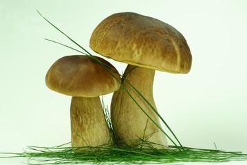 großer und kleiner Steinpilz im Gras