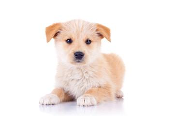 cute stray dog sitting