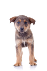 Sweet and sad puppy