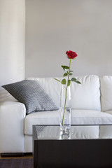 rose on table in modern living room