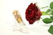 Rote Rose & Geldgeschenk