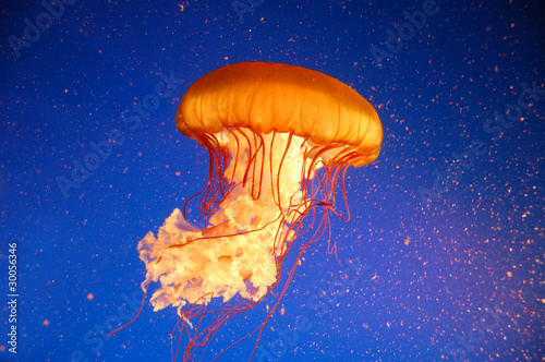 Qualle Jellyfish