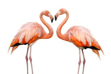 Zwei Flamingos bilden eine Herzform