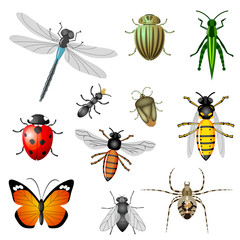 Insects or bugs, vector collection