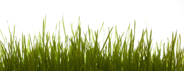 Gras frontal